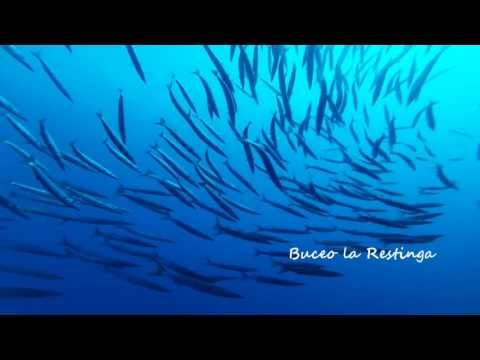 Buceo la Restinga. Barracuda Point, El Bajón