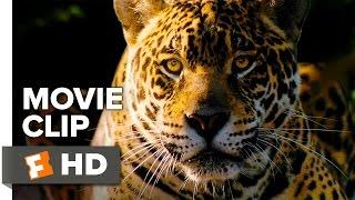 Nonton Ardor Movie Clip   Big Cats  2015    Gael Garcia Bernal Movie Hd Film Subtitle Indonesia Streaming Movie Download