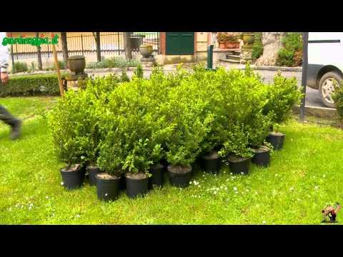 Come scegliere le piante: esigenze, clima, colori, stagioni e esposizione
