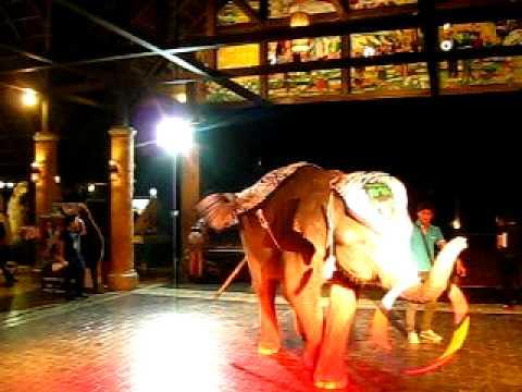 การแสดงความสามารถของช้างแสนรู้