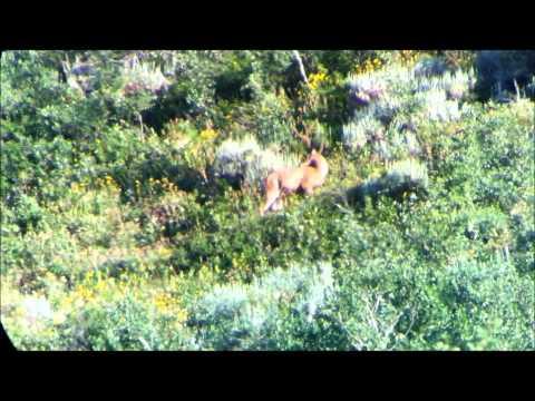 Wasatch Front Archery Mule Deer Hitlist 2013