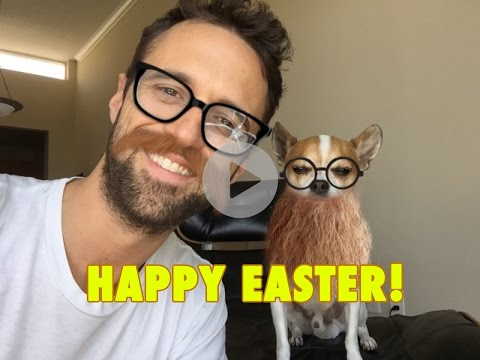 Chihuahua Pancho laid an egg – Happy Easter!
