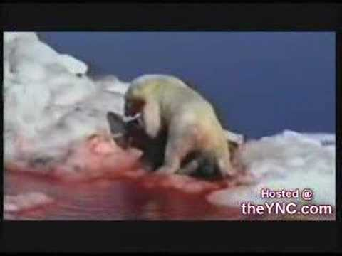0 Polar Bear Hunt
