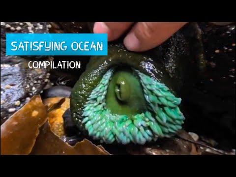 Oddly Satisfying Sea Animal Compilation!