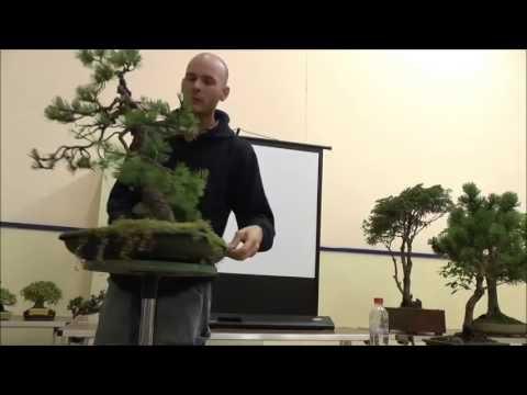 Peter Warren Tree Critique - Pines