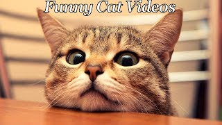 """""""IMPOSSIBLE CHALLENGE"""" Try not to laugh while watching Funny Cats Videos Compilation 2017, The best and funniest dog videos ever Hope you enjoy watching.If you liked it Please Like, Share and Subscribe.Be Sure to Check Other Instagram Compilations:*Try Not To Laugh Challenge* Funniest Dog Videos 2017 :https://www.youtube.com/watch?v=aEzZLXBH3rUSocond Channel -https://www.youtube.com/channel/UC9wyqbxQkTNtY5BFRcAx8DQSubscribe! : https://www.youtube.com/c/allofvinesInstagram : https://www.instagram.com/allofvines_Facebook : https://www.facebook.com/allofvine"""