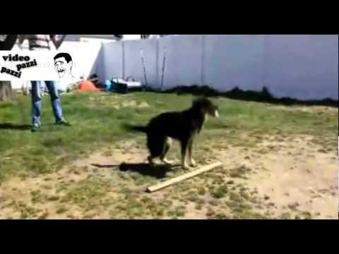 incredibile quello che sà fare questo cane