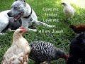 Pit Bull & Chicks (4 months later) So Funny!*Love Me Tender*