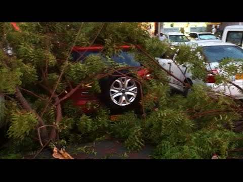 Strong winds topple trees in Ruwi damaging cars