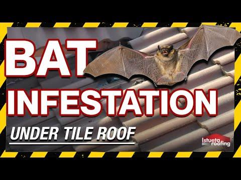 Streha polna netopirjev