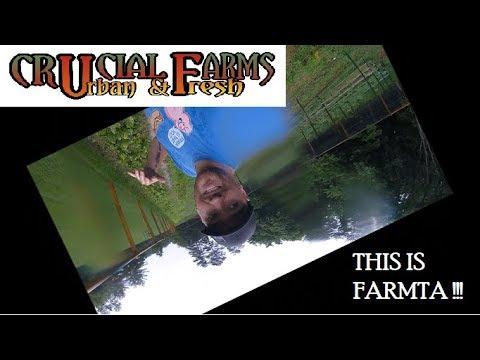 Sunny Farm update day