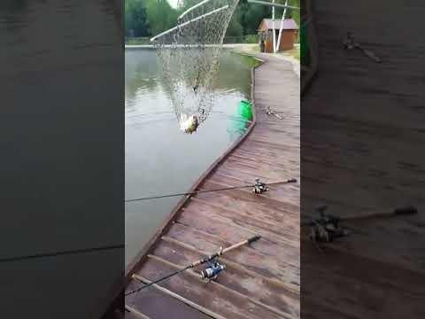 Видеоотчет о рыбалке за 23 июля 2021 г.