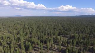 I filmed myself taking off and landing at a site where I camped in the Deschutes National Forestfilmed with DJI Phantom 3 Standard