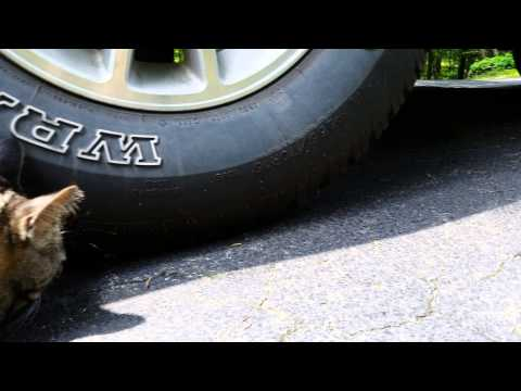 Cat And Mouse Around The Tire