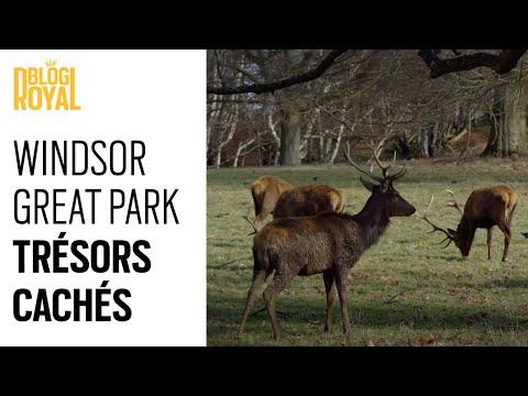 Windsor Great Park : Trésors cachés d'un parc Royal