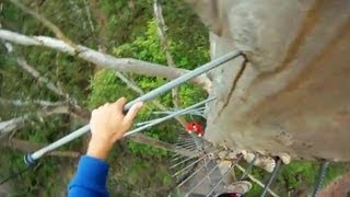 Gloucester Australia  City new picture : CLIMBING 72M GLOUCESTER TREE - NO SAFETY