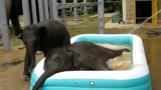 Слонята в надувном бассейне