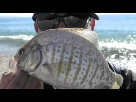 Its Not Fishing Its Catching – Santa Monica, CA 2010