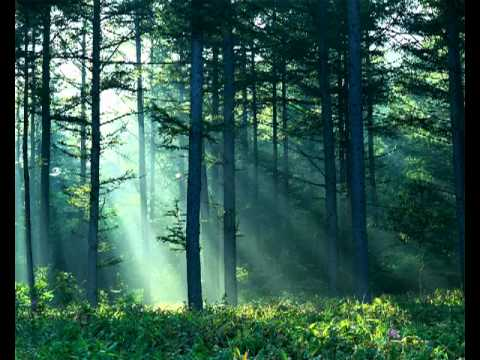 Forest - Forest and Nature sounds for relaxation.