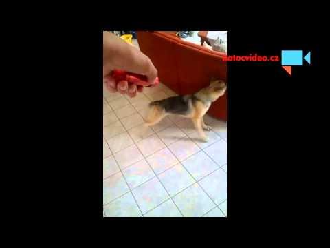 Psí kusy s laserem