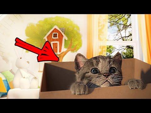 МОЙ Маленький КОТЕНОК СИМУЛЯТОР котика как мультик видео для детей виртуальный питомец // СофиГоу