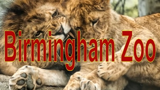 Birmingham (AL) United States  city photo : Animals in Birmingham Zoo in Birmingham, Alabama, United States