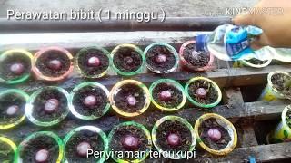 Video Menanam Bawang Merah Sendiri & Hobi Bertanam di Lahan Sempit MP3, 3GP, MP4, WEBM, AVI, FLV Mei 2019