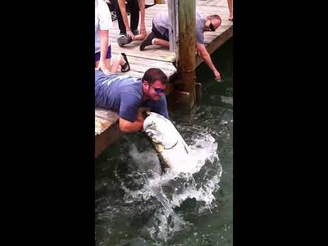 I will never feed the Tarpon in the Keys Ever Again!
