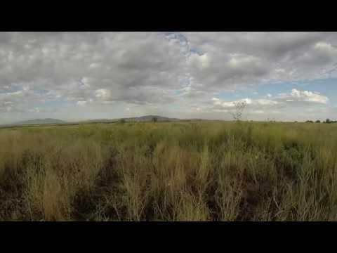 opening morning utah dove hunt part 2