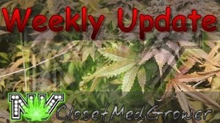 Weekly Update 3/22/2017 by  NVClosetMedGrower
