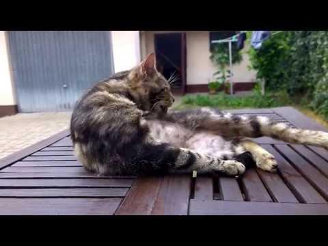 Mour sousedův kocour (видео)