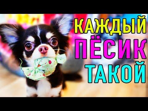 КАЖДЫЙ ПЕСИК ТАКОЙ | ПАРОДИЯ Magic Pets