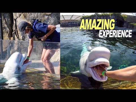 We Spent The Day With Rescued Marine Life (Amazing Experience)