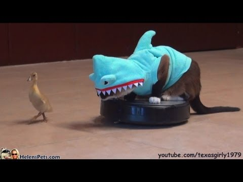 Cat In A Shark Costume Riding Roomba Chasing A Duckling
