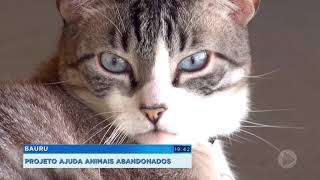 Projeto ajuda animais abandonados em Bauru