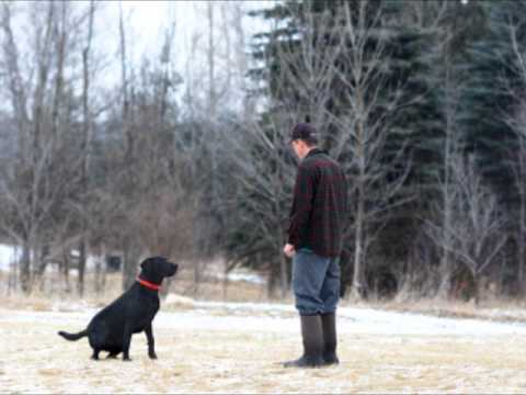 Dog Training Techniques   Secret to Dog Training – Is Using Your Voice the Best Way?
