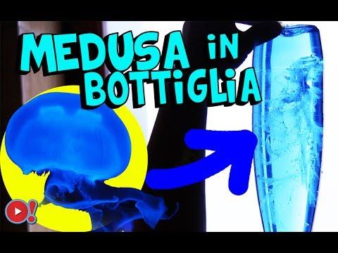 come fare la medusa in bottiglia (esperimento pazzesco)