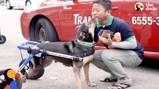 Paralyzed Dog Reunited With Man Who Never Gave Up on Her | The Dodo by The Dodo