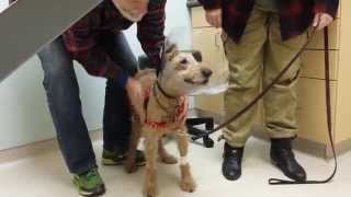 Formerly Blind Dog Seeing The Family After Surgery