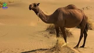 Hello Doston....Is video mein maine aapko duniya ke ek behad cultural aur khoobsurat desh turkmenistan ke baare mein bataya hai....doston ye shahar....culture ...