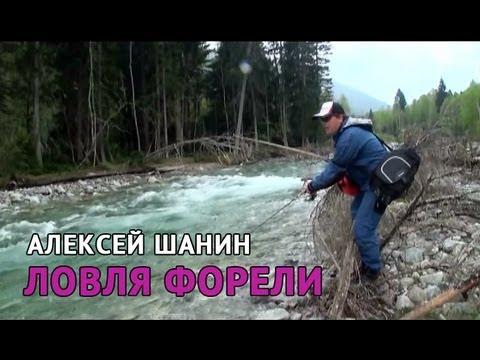 ловля ручьевой форели на кавказе календарь