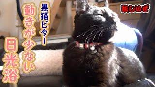 気持ち良さそうに日光浴をする黒猫ビター(面白い&可愛い猫)