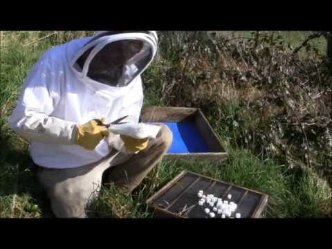 Top 3 ways of feeding sugar to honey bees In an absolute emergency