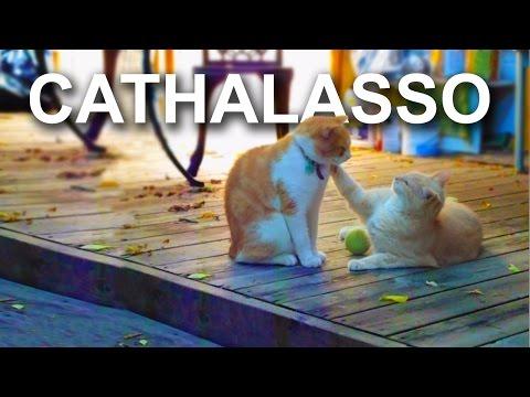 CATHALASSO - PAROLE DE CHAT