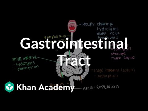 Meet The Gastrointestinal Tract
