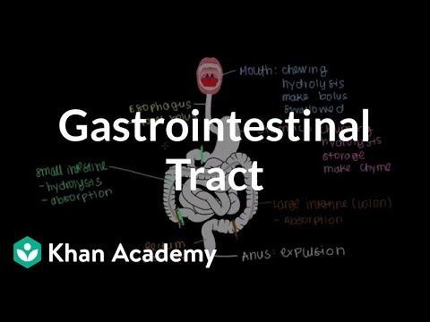 Meet the gastrointestinal tract video khan academy ccuart Gallery