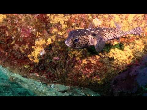 Scuba Diving Cabo San Lucas_Legjobb videók: Búvárkodás
