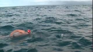 Дельфины пришли на выручку британскому пловцу