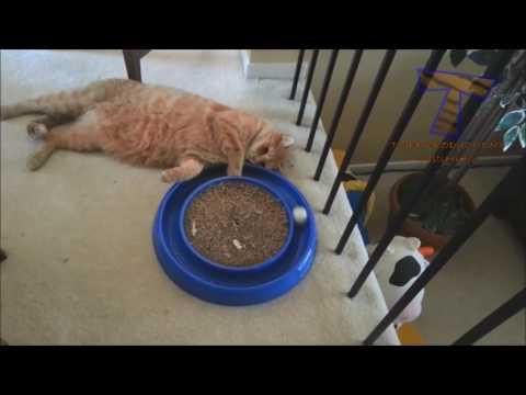 những tình huống cười đau bụng của những con thú cưng [top hài hước mới nhất năm 2017] - Thời lượng: 10 phút.