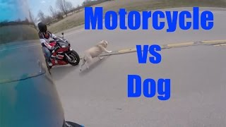 Video MOTORCYCLE VS DOG ACCIDENT! NEAR DEATH! I WAS ON THIS RIDE! MP3, 3GP, MP4, WEBM, AVI, FLV Mei 2017